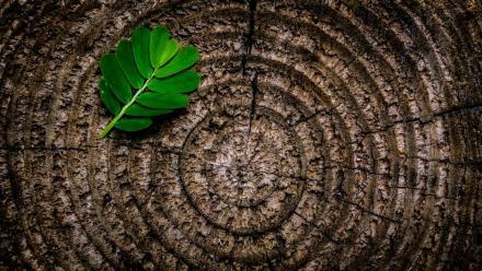 Informacja dotycząca wycinki drzew