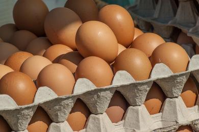 GIS ostrzega: bakterie Salmonella na powierzchni skorupek jaj konsumpcyjnych
